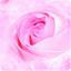 玫瑰动态壁纸下载 V1.0 安卓版